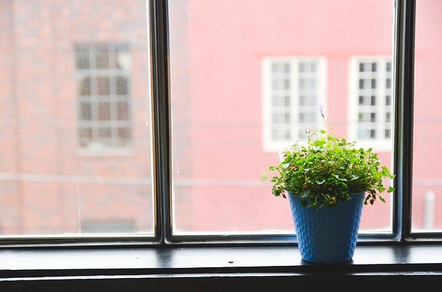 image d'une fenêtre et d'une plante